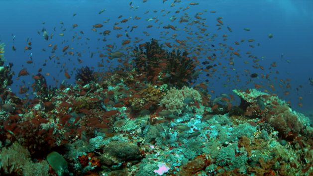 Ecological system to clean up the sea