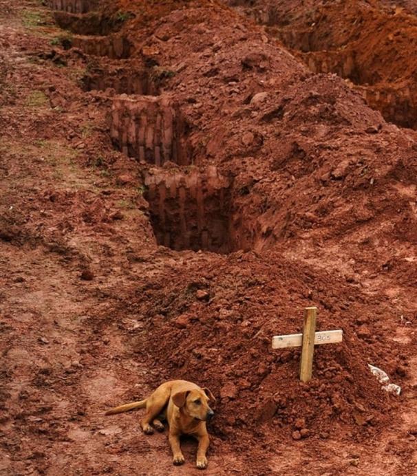 dog sad for owner death