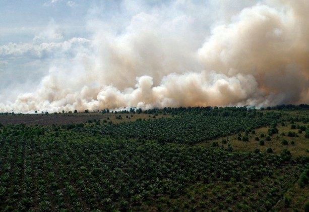 Indonesia forest fire