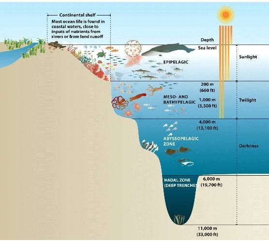5 mysterious things about the mariana trench candlepozt the first zone is the littoral zone representing sea level and the bathyal zone depth of three kilometers below sea level publicscrutiny Choice Image