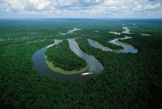 5 Wild Deadly Animals that Live in The Amazon River.